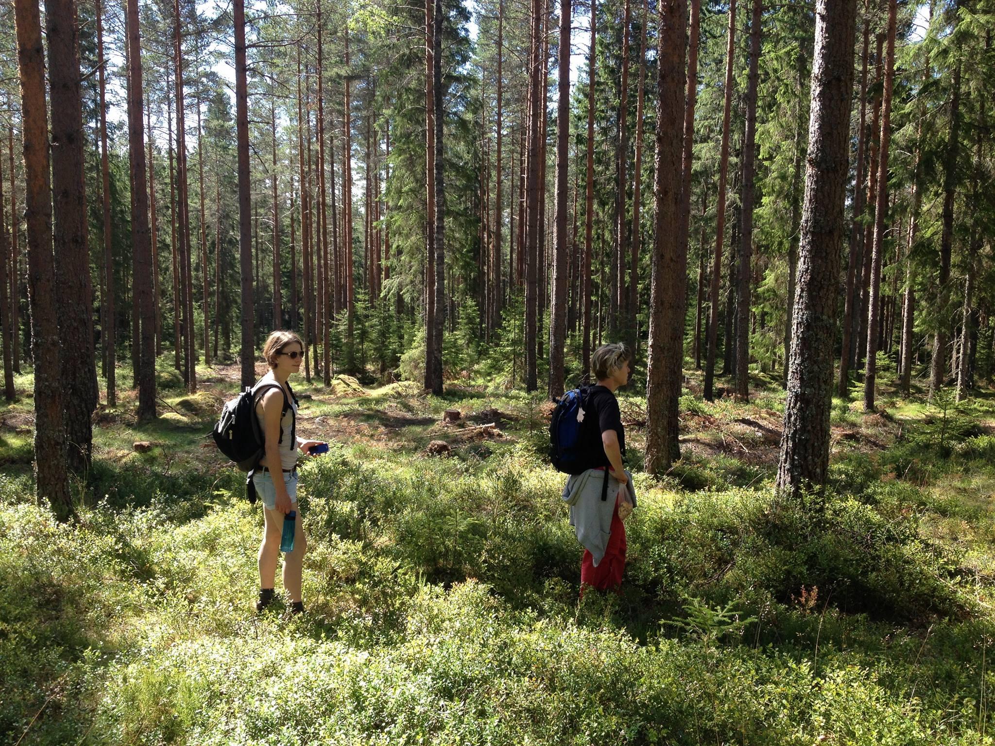 Week 28: Heel veel schrijven & een reisje naar Zweden